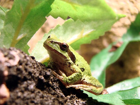 Green Frogger by Danielle LaBerge