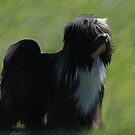 Tibetan Terrier... by Cazzie Cathcart