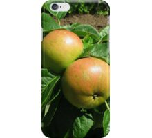 Apples Ripening In The Sunshine - Heligan iPhone Case/Skin