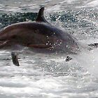 Dolphin - Costa Rica by Dave Mortell
