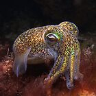 Dumpling Squid. by James Peake