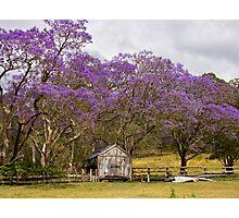 Jacaranda Barn Photographic Print