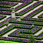 Formal Garden - Chateau Villandry, Loire Valley 2 by Alison Cornford-Matheson