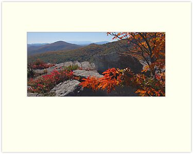 Blue Ridge Palette by Jane Best