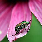 Japanese Beetle by BigD