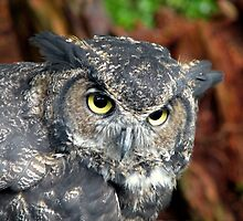Great Horned Owl by Robert Jenner