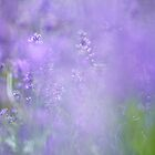 Lavender Spray by Nick Huggins