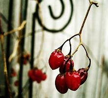 a touch of red by Rachel  McKinnie