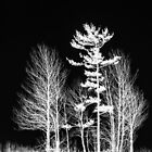 Trees - White On Black by jules572