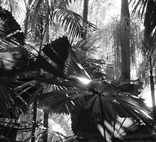 Light on a Palm Leaf by Of Land & Ocean - Samantha Goode