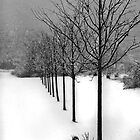 B&W WINTER by Glenn-Patrick Ferguson