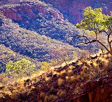 Ghost Gums of Ormiston Gorge, 14 October 2008 by Steven Pearce