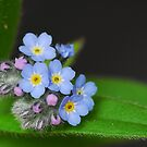 Pink and blue by Heather Thorsen