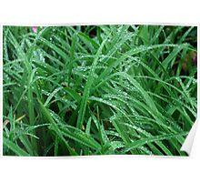 Wet Grass Poster