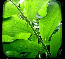 Green - TTV by Kitsmumma