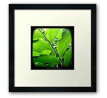 Green - TTV Framed Print