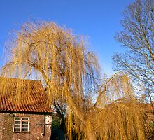 Golden willow by the river by Gary Rayner