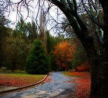 Autumn Road by Evita