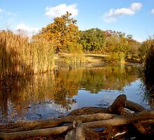 Warren Pond in Epping Forest by Gary Rayner