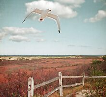 Gull Over Cape Cod Trail by BrookeRyanPhoto