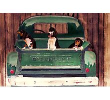 Three Dogs and a Truck Photographic Print