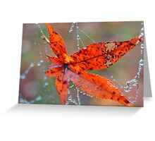 Morning Discovery Greeting Card