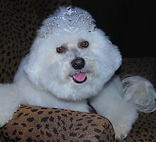 Princess Maggie  by Judy Grant