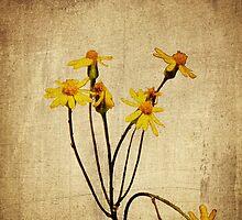 Golden Ragwort - Textured by mcstory