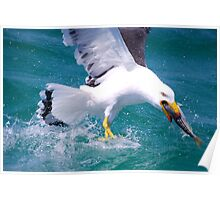 It's Mine - Pacific Gull Poster