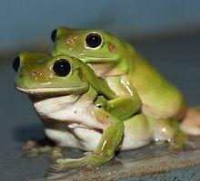 Leap Frog by Elaine Harriott