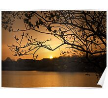 Sunset through a Tree Poster