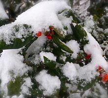 Snow Cover Holly by Lynnrmorris