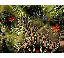 Tangled Woods Photographic Print