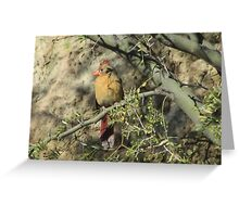 Female Cardinal in a Tree Greeting Card
