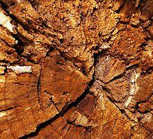 """Putrefied Wood by Lenora """"Slinky"""" Regan"""