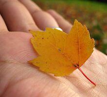Fall in my hand by Nataliya Khan