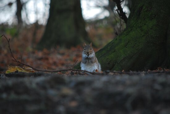Small squirrel...Big World! by Paul Gibbons