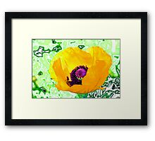 Yellow poppy for spring! Framed Print