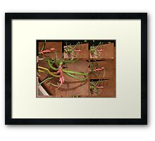Take me to your leader please?? Framed Print
