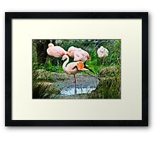 It's good to stretch Framed Print