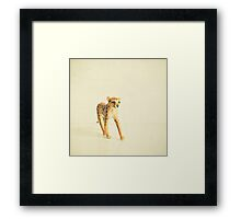 Catwalk Cheetah Framed Print