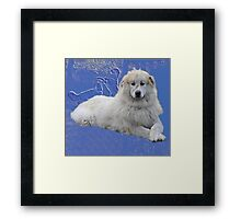 Pyrenean mountain dog Framed Print