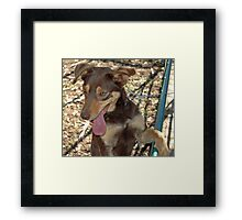 Dog. Framed Print
