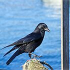 Crow At The Harbour by Susie Peek