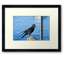 Crow At The Harbour Framed Print