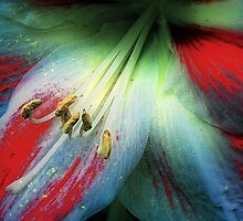 Hippeastrum 'Carnivale' IMPRESSIONISTE by Peaches1950
