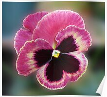 Cute Little Pansy Face Poster