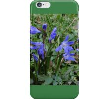 Siberian Squill - Spring's messenger... iPhone Case/Skin