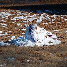 Death Of A Snowman by WildestArt