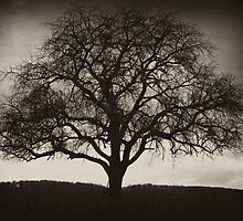 Drabness by drawwithlight